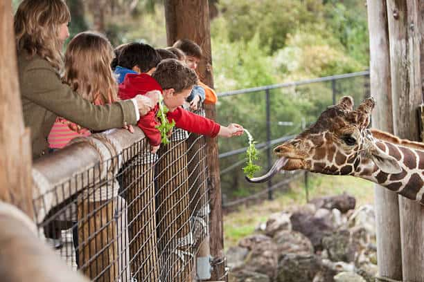 Zoo for Kids: What Your Child Will Learn and How to Prepare?