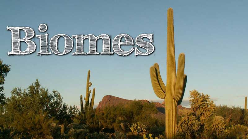 Biomes of the World for Kids: All You Need To Know!